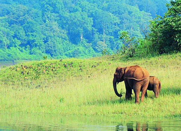 Beautiful Periyar National Park