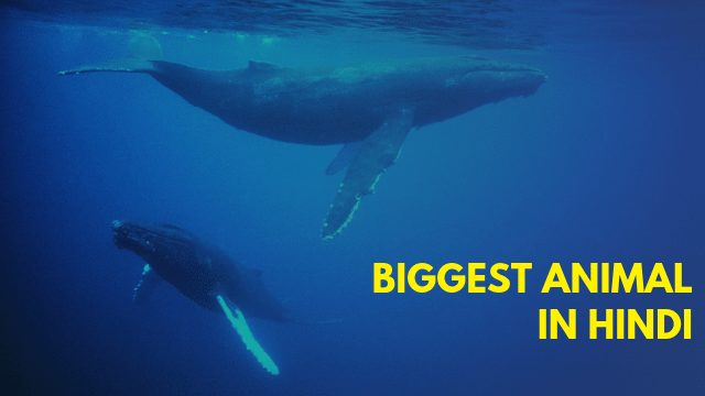 Biggest Animal In Hindi