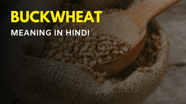 Buckwheat Meaning in Hindi