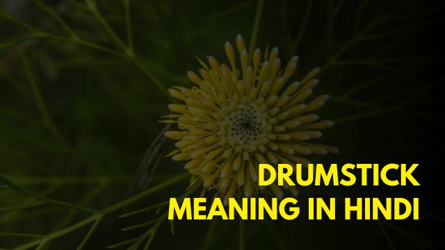 Drumstick Meaning in Hindi