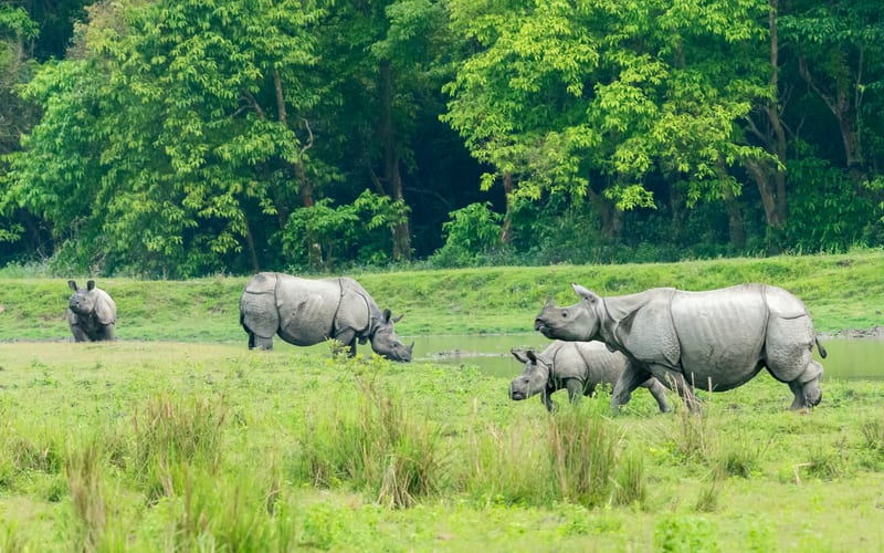 Kaziranga national park is the biggest park in eastern part of India