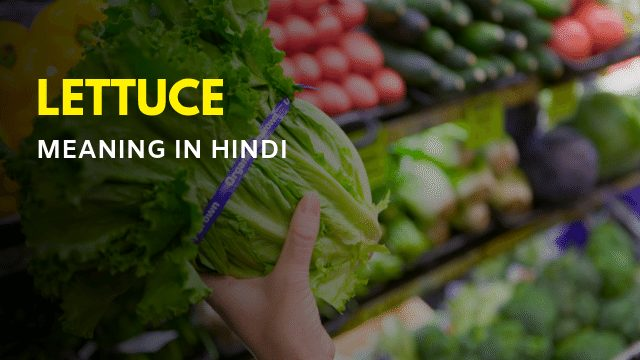 Lettuce Meaning in Hindi