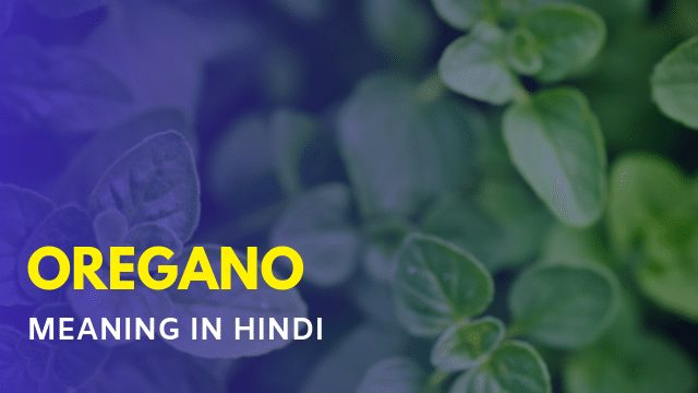 Oregano Meaning in Hindi